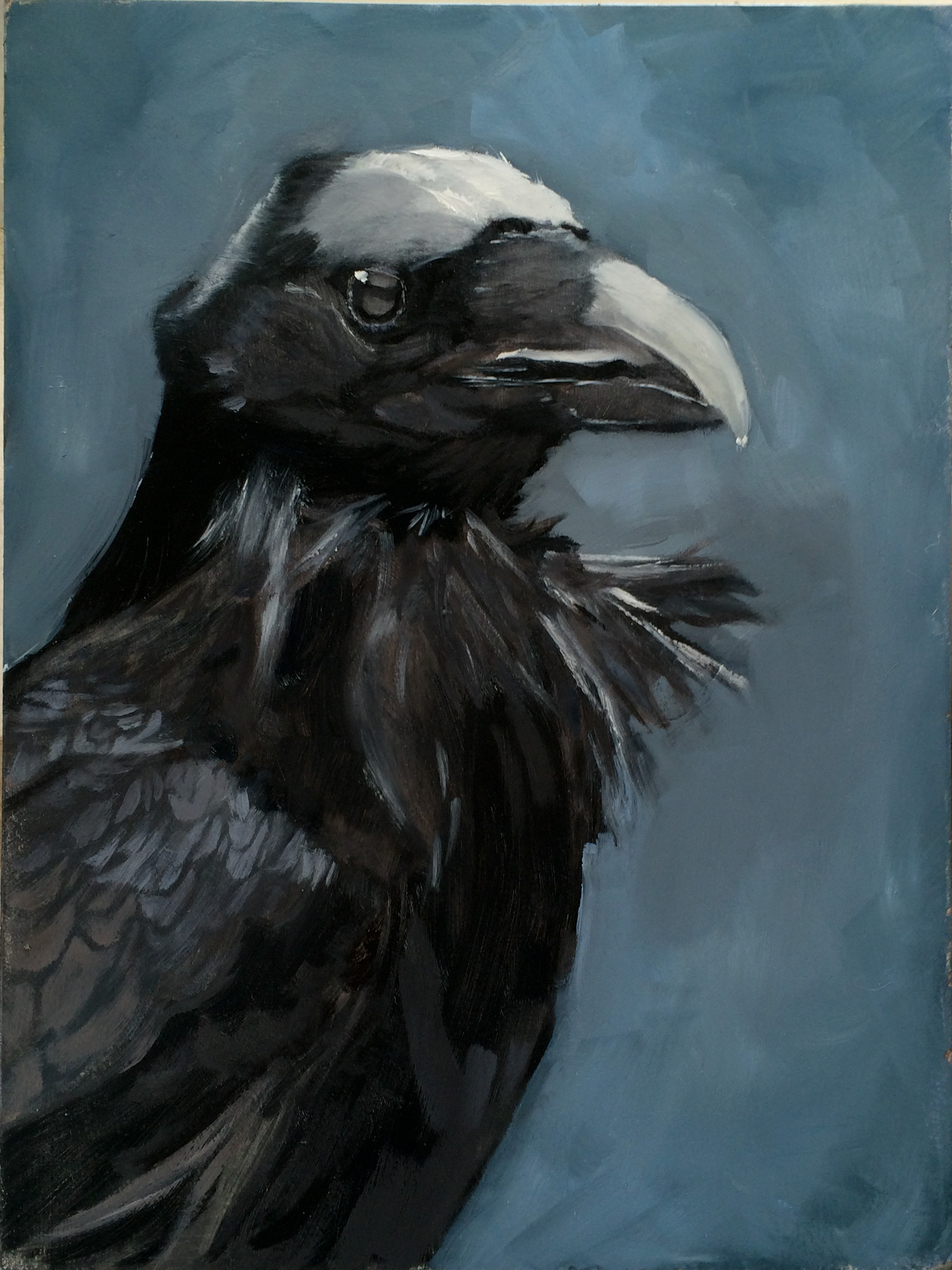crow the sweeper bird I just supported feather feeder on  go out in the snow in their pajamas just to spread bird  our soft-sweeper design along with our.